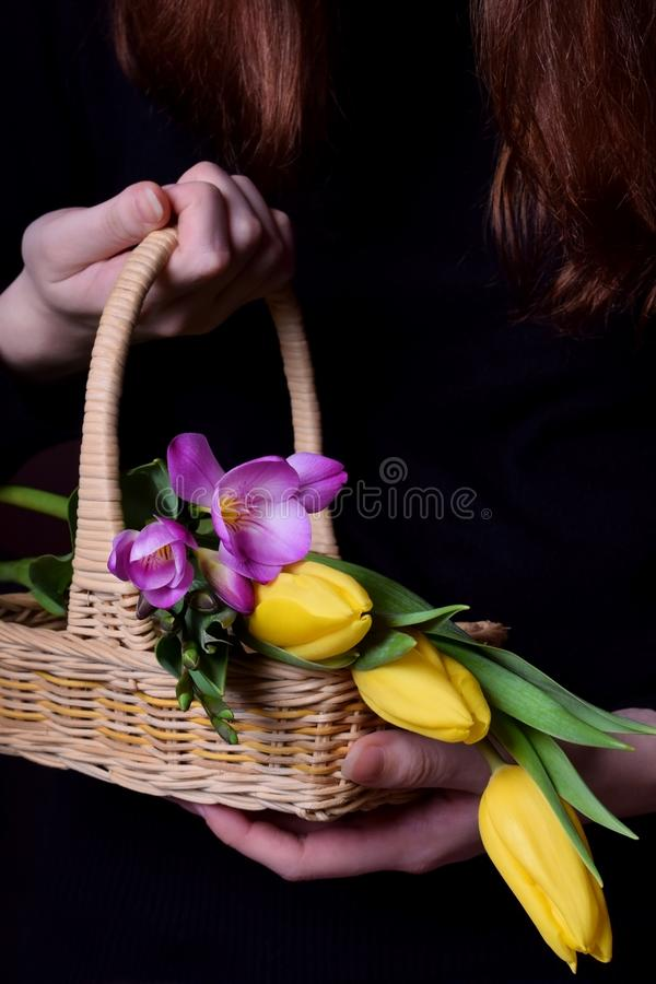 Tulips and freesia flowers in a wicker basket held by a woman stock image