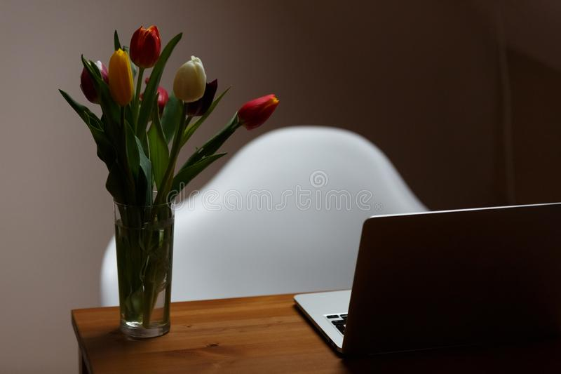 Tulips in a glass on the table next to laptop. A bouquet of tulips in a glass on a wooden desk next to a laptop. White chiar behind out of focus royalty free stock photos