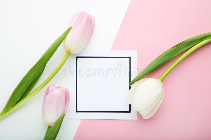 Tulips with greeting card royalty free stock photo