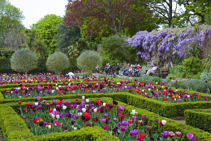 Download Tulips In Holland Park London Editorial Image