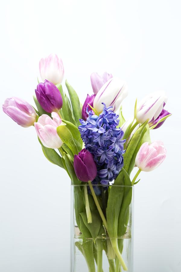 Tulips and hyacinth stock image