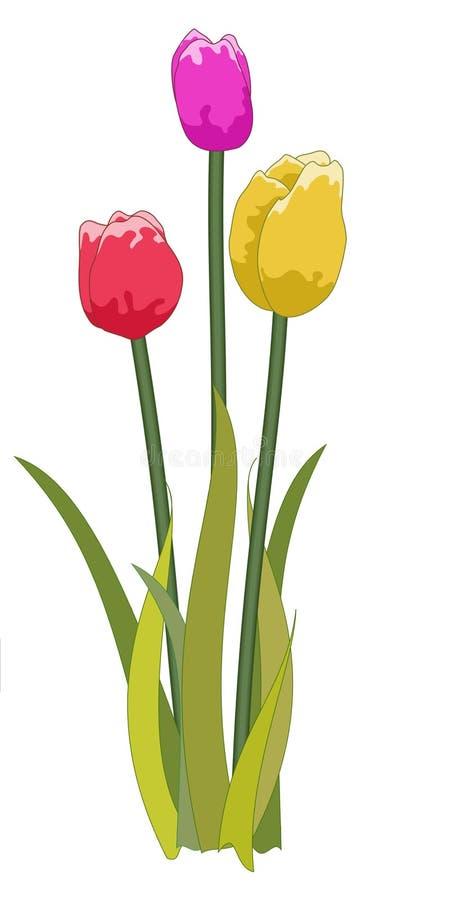 Tulips misturados ilustração do vetor