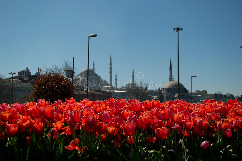Tulips and mosques stock image