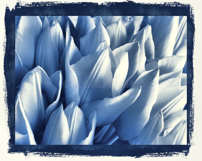 Tulips no azul de delft ilustração royalty free