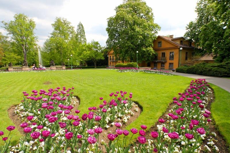 Tulips no parque imagem de stock
