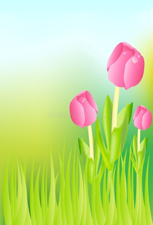 Tulips no prado ilustração stock