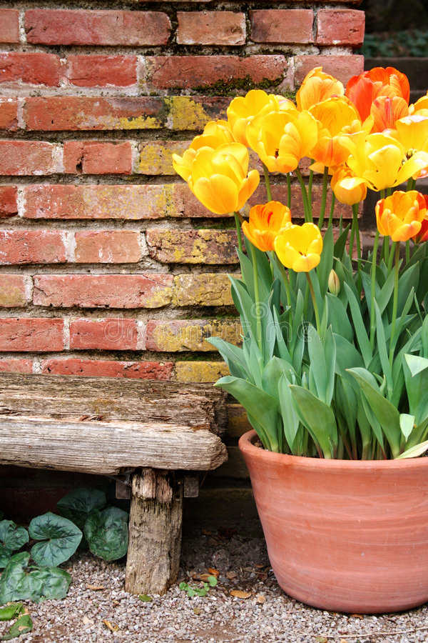Tulips And Old Wall Royalty Free Stock Images