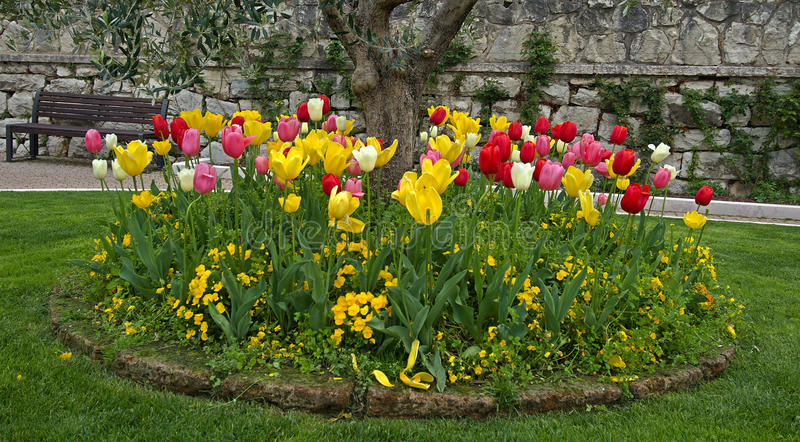 Download Tulips in the park stock image. Image of tulip, small - 25159481