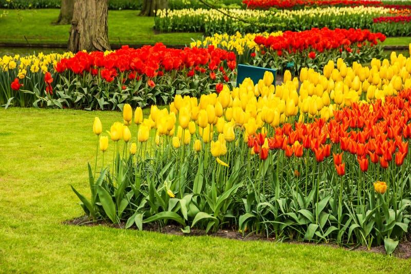 Tulips Park Keukenhof - Largest Flower Garden In Europe, Holland ...