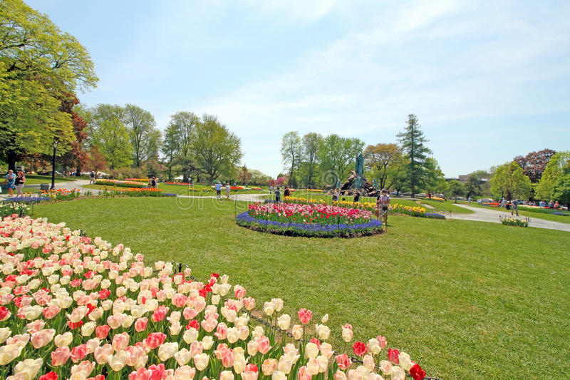 Marvelous Download Tulips In Park, Tulip Festival, Albany NY Editorial Stock Photo    Image: