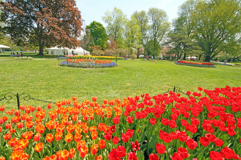 Download Tulips In Park, Tulip Festival, Albany NY Editorial Stock Photo    Image Of