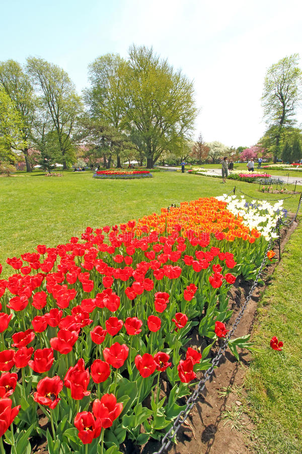 Download Tulips In Park, Tulip Festival, Albany NY Editorial Photography    Image Of Visitors