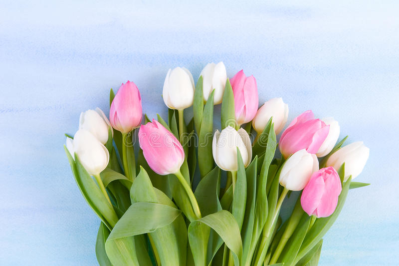 Tulips on pastel blue watercolor background stock image