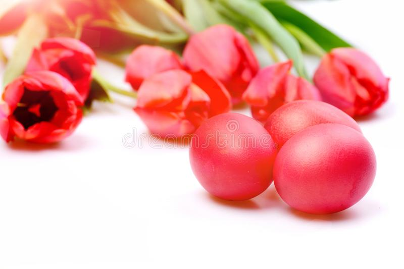 Tulips in pink or red colors isolated on white background stock images
