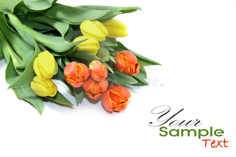 Tulips Post Card royalty free stock photo