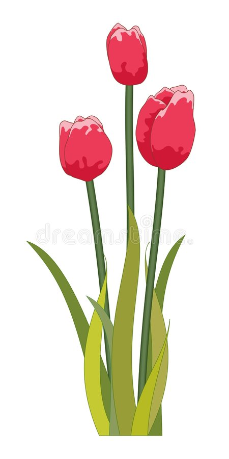 Tulips red stock image