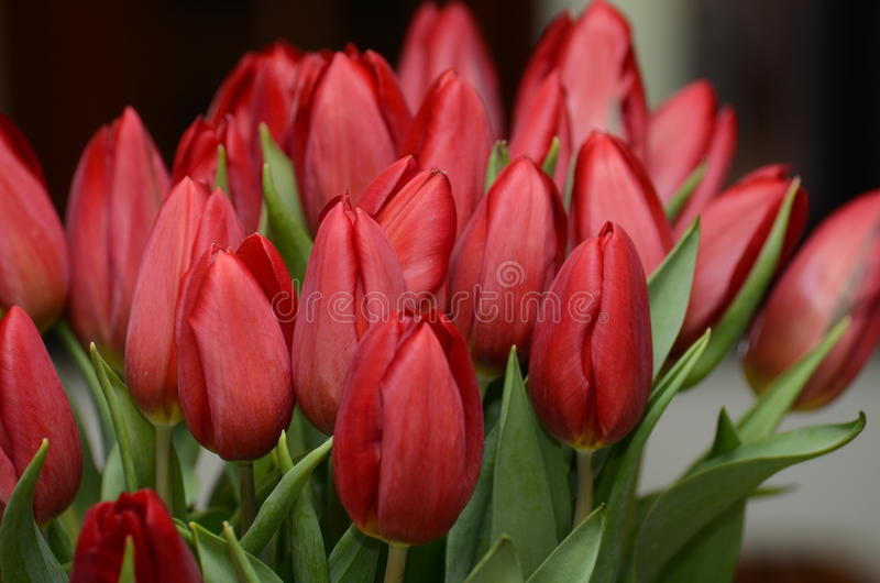 Tulips red. Red tulips flowers colorful sunny wonderful amazing admirable royalty free stock photo