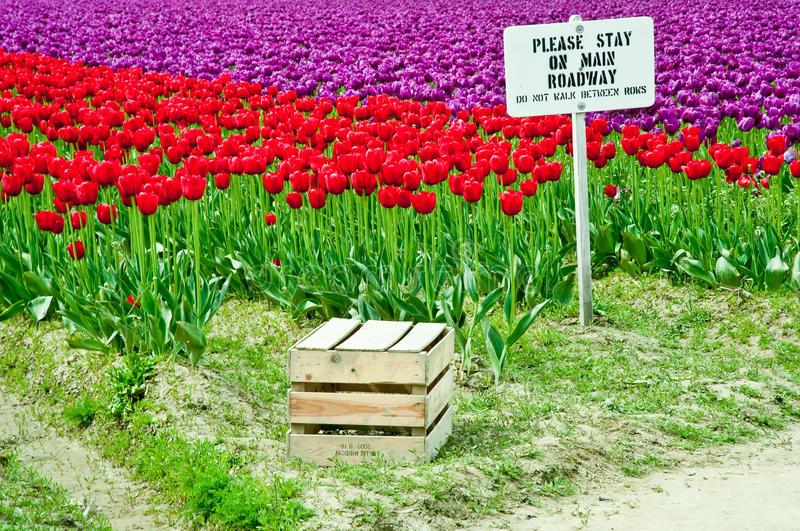 Download Tulips stock image. Image of fresh, grow, ornamental - 32410157