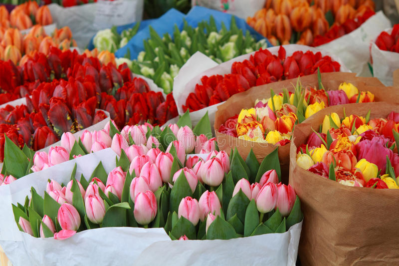 Tulips for sale royalty free stock photos
