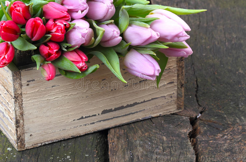 Tulips for sale royalty free stock image
