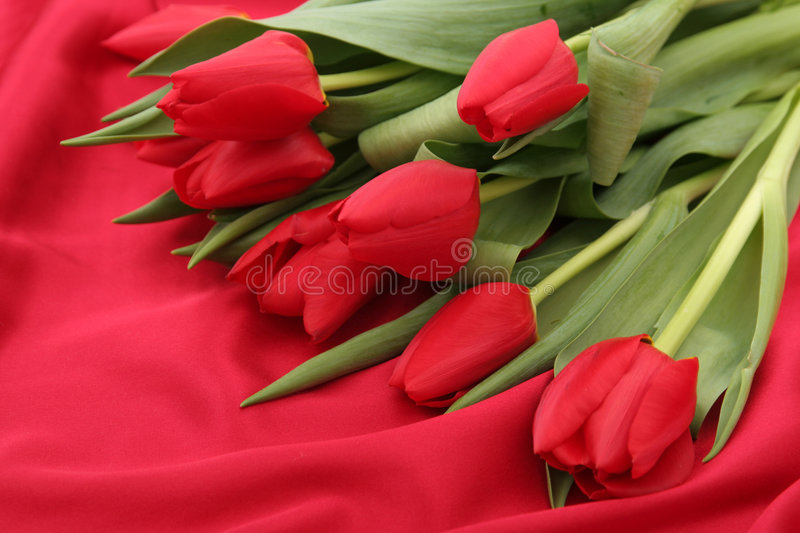 Download Tulips on Satin stock photo. Image of romantic, nature - 461044
