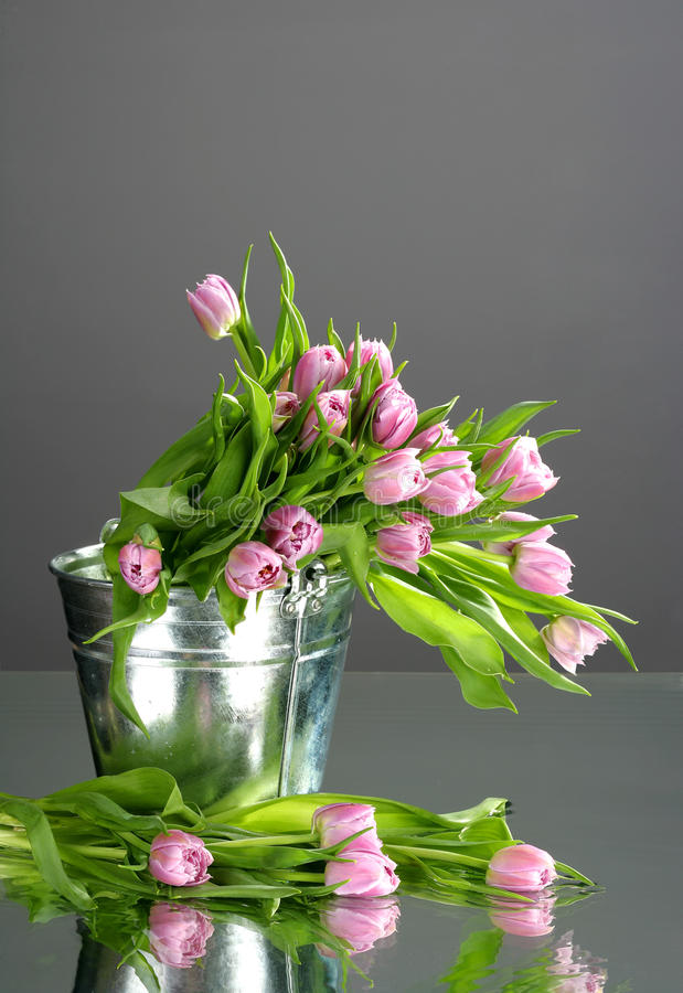 Tulips in small bucket with reflection stock photography
