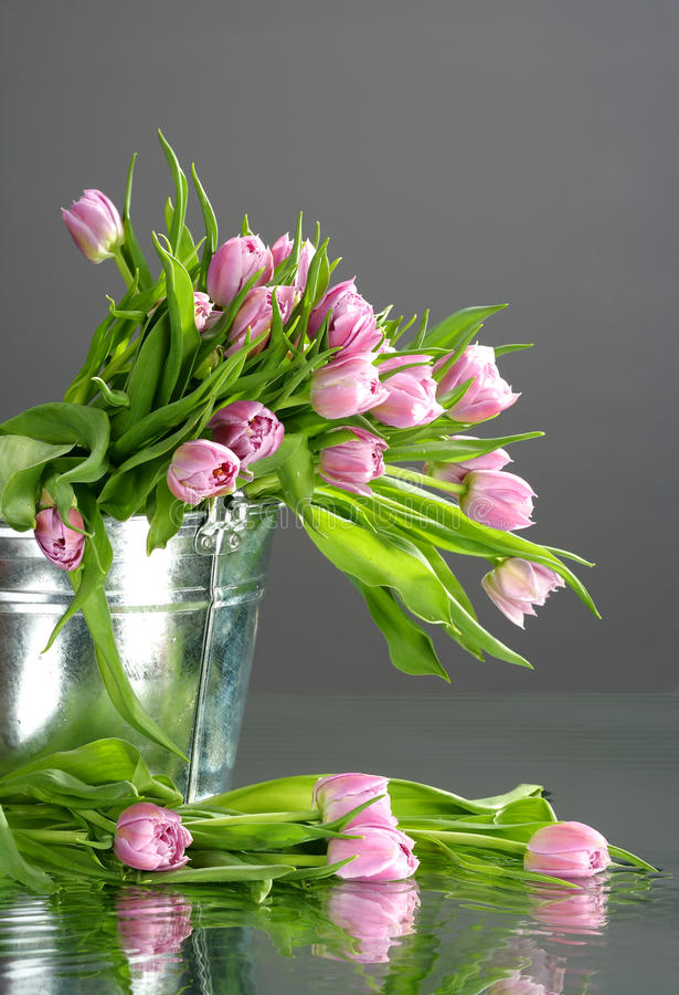 Tulips in small bucket with reflection stock photo