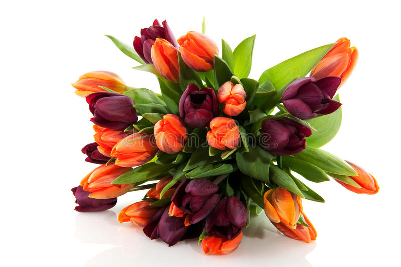 Download Tulips in spring stock image. Image of orange, isolated - 12922607