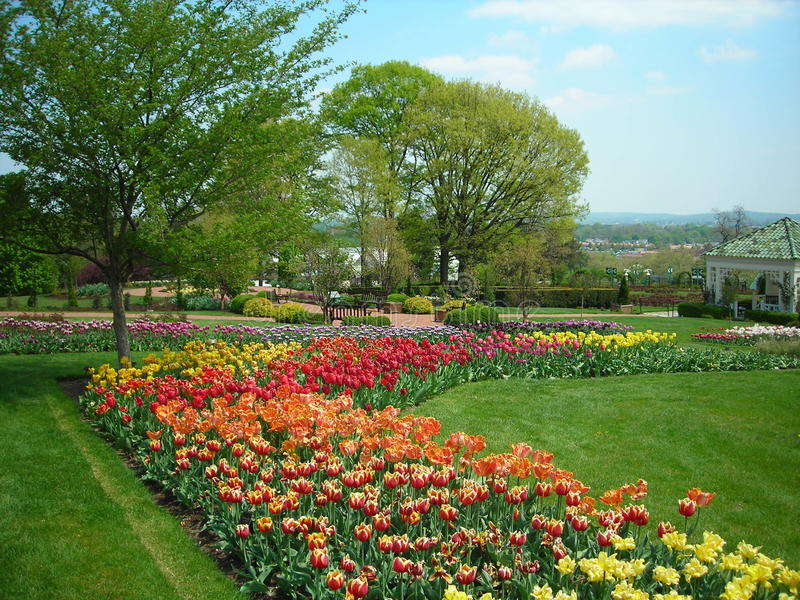 Tulips in the Spring. The tulip gardens at Hershey Gardens in early May stock image