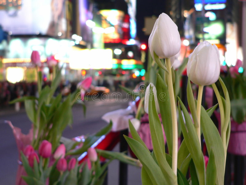Download Tulips and Times Square stock photo. Image of times, street - 91474