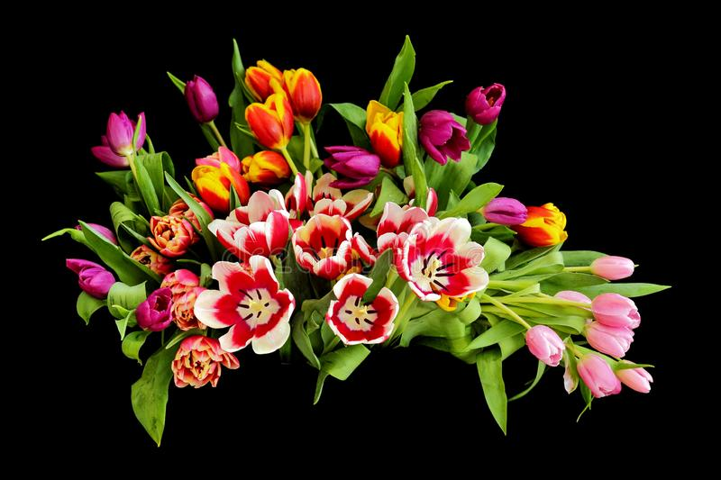 Tulips in various colors and types in a vase with a black background with natural light. stock image
