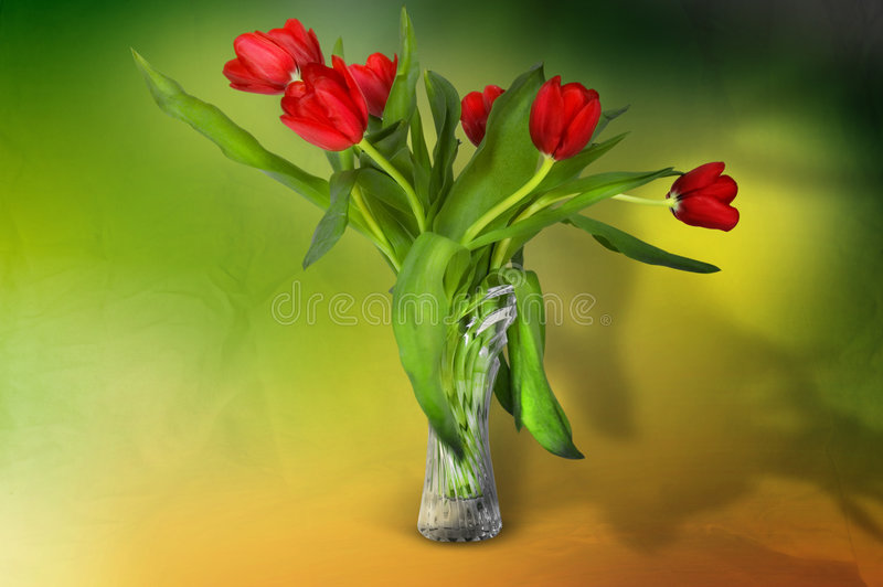 Tulips in vase. Red tulips in a glass vase with dramatic lighting. Side perspective stock photos