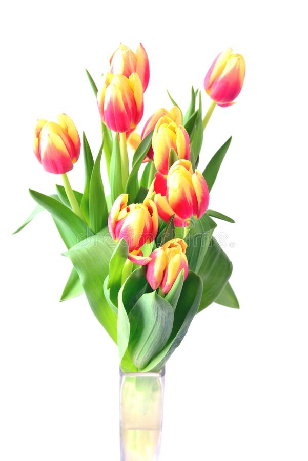 Tulips in vase. Yellow and red spring flowers. royalty free stock photography