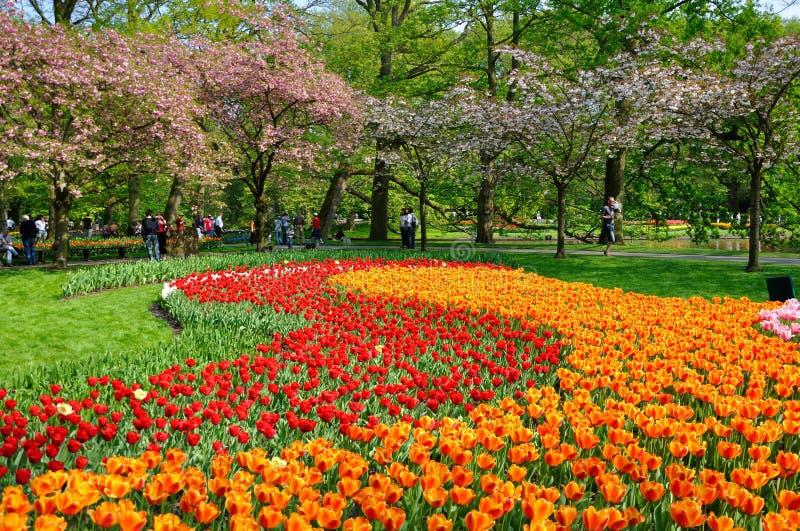 Tulips vermelhos e alaranjados em Keukenhof imagem de stock royalty free