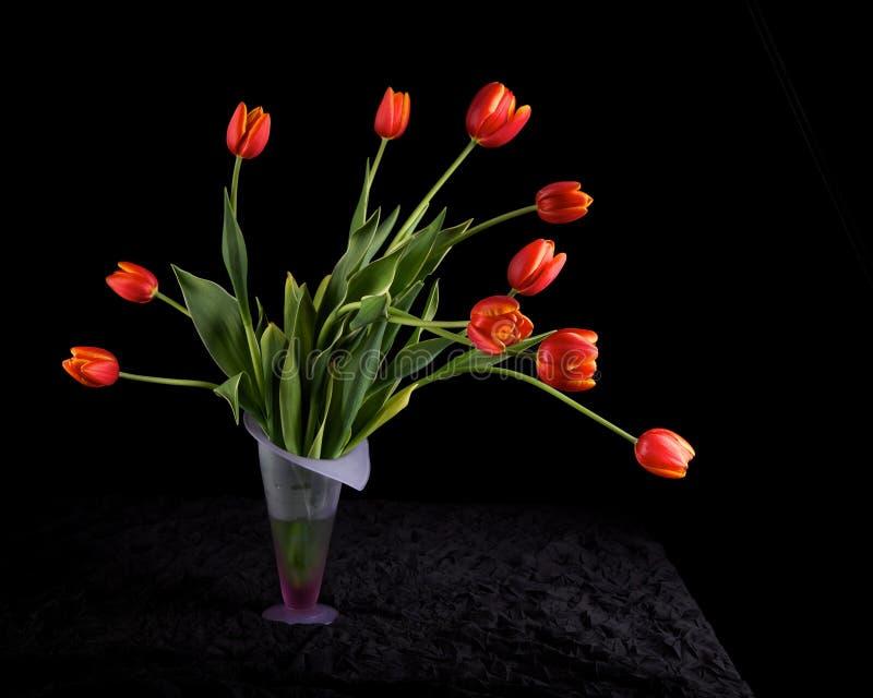 Tulips vermelhos no vaso foto de stock royalty free