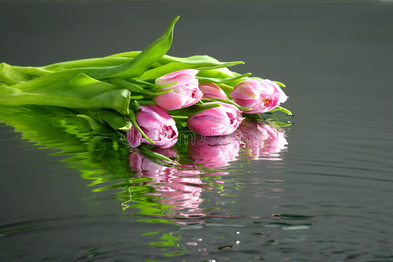 Tulips in water with reflection stock photo
