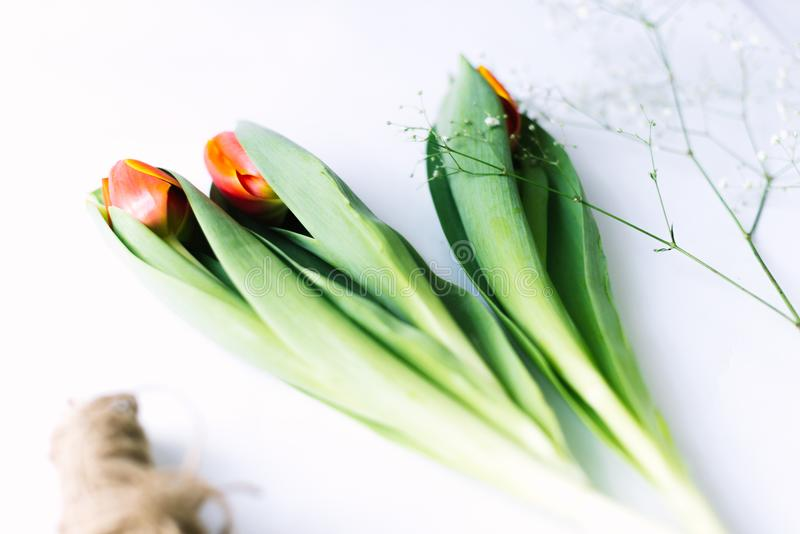 Download Tulips On A White Background With A Rope. Isolate. Stock Photo - Image of closeup, arrangement: 111619946