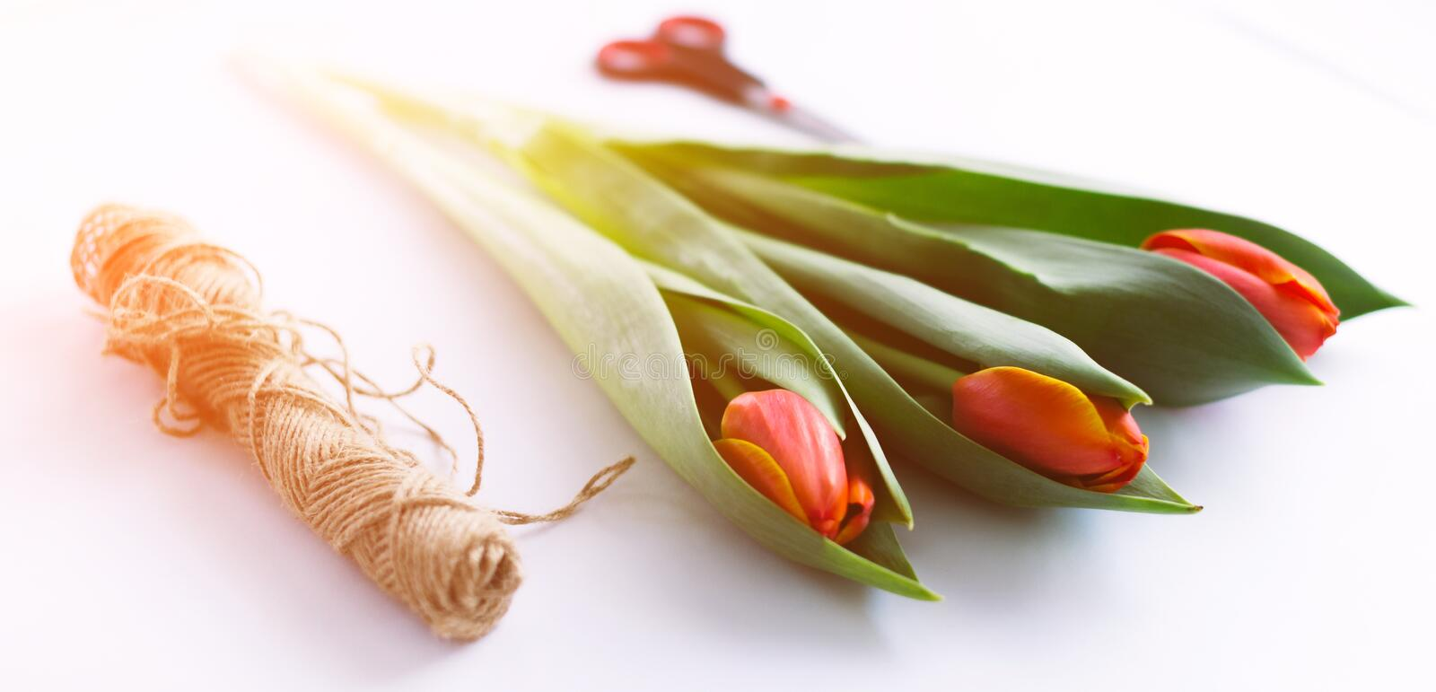 Download Tulips On A White Background With A Rope. Isolate. Stock Image - Image of paper, bunch: 111619941