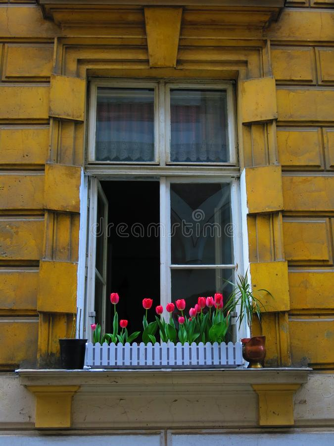 Tulips in a window box royalty free stock images