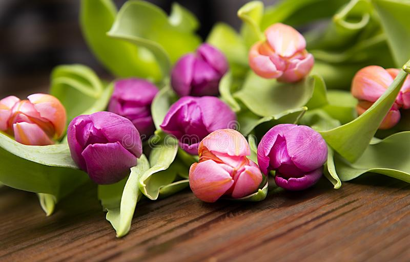 Tulips, in wood background royalty free stock photos