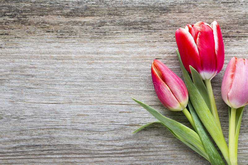 Tulips on the wooden background. royalty free stock photo