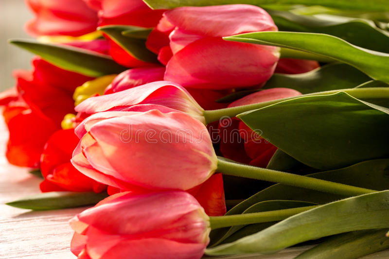 Tulips on wooden background close up royalty free stock images