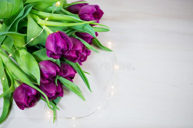 Tulips on wooden background, lila tulips stock photography