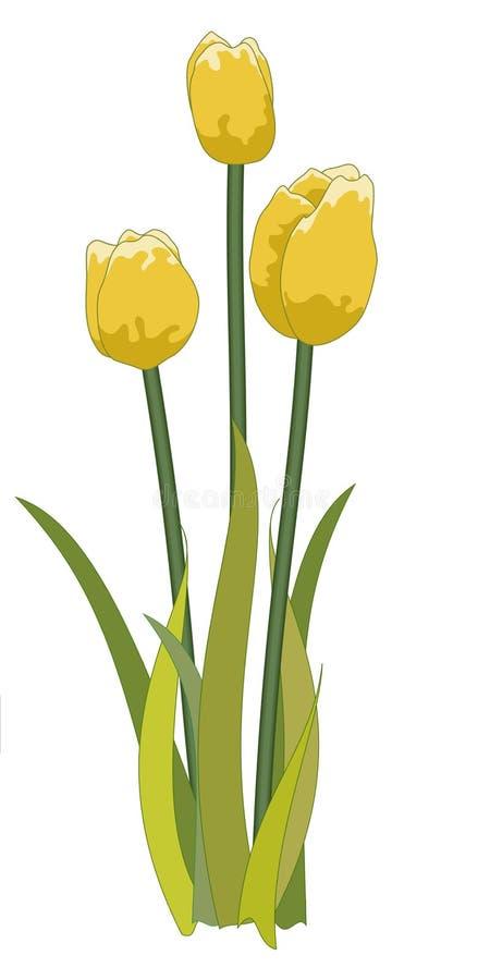 Tulips yellow stock photography