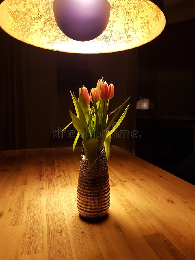 Tuliptime lizenzfreie stockfotos