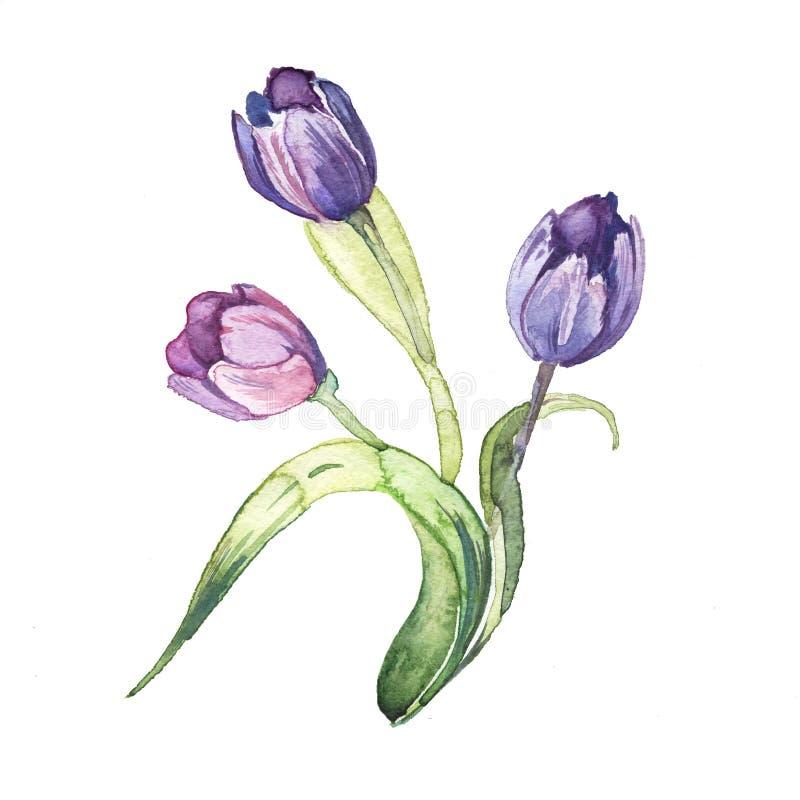 Tullipen blommar vattenfärgmålningvattenfärgen vektor illustrationer