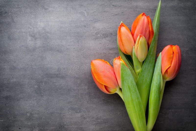 Tulpan apelsin på den gråa bakgrunden fotografering för bildbyråer