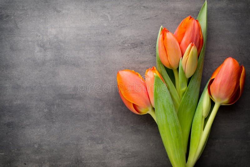 Tulpan apelsin på den gråa bakgrunden royaltyfria foton