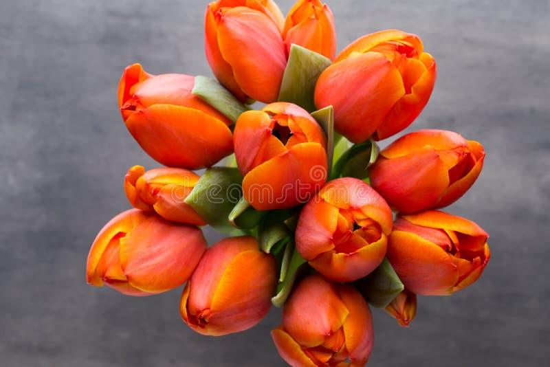 Tulpan apelsin på den gråa bakgrunden royaltyfri bild