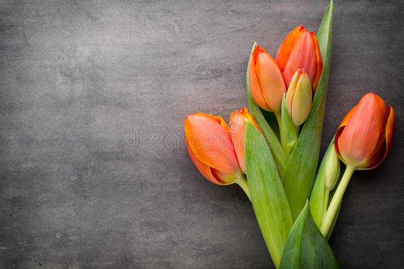 Tulpan apelsin på den gråa bakgrunden arkivbild